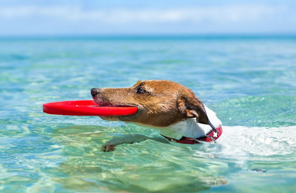 "201607 Canarias avanza como destino playero ""dog-friendly"" y… ¡lo que queda!-fluyecanarias (1)"