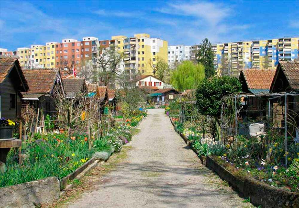 201608-gestion-huerto-urbano-fluyecanarias-3