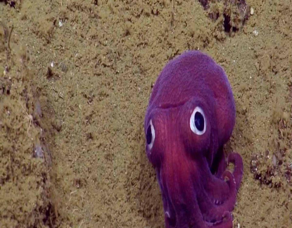 calamar-peluche-fluyecanarias