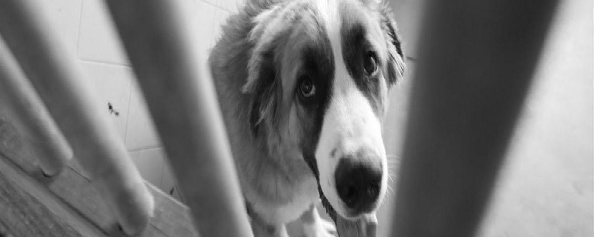 201612-el-abandono-de-mascotas-en-canarias-no-cesa-adopta-con-responsabilidad