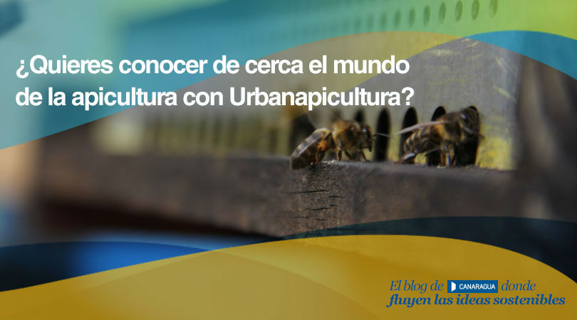 201707 Concurso Apicultura