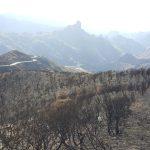 La cumbre de Gran Canaria un mes despues del incendio 10