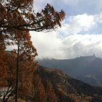 La cumbre de Gran Canaria un mes despues del incendio 11