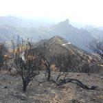 La cumbre de Gran Canaria un mes despues del incendio 13