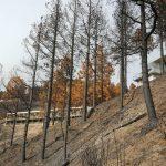 La cumbre de Gran Canaria un mes despues del incendio 14