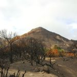 La cumbre de Gran Canaria un mes despues del incendio 15