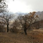 La cumbre de Gran Canaria un mes despues del incendio 16