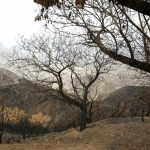 La cumbre de Gran Canaria un mes despues del incendio 18