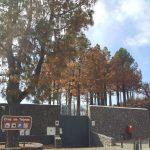 La cumbre de Gran Canaria un mes despues del incendio 2