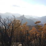 La cumbre de Gran Canaria un mes despues del incendio 21