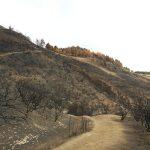 La cumbre de Gran Canaria un mes despues del incendio 22