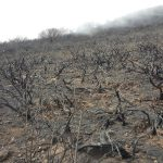La cumbre de Gran Canaria un mes despues del incendio 24