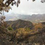 La cumbre de Gran Canaria un mes despues del incendio 25