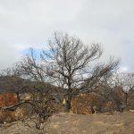 La cumbre de Gran Canaria un mes despues del incendio 26