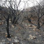 La cumbre de Gran Canaria un mes despues del incendio 3