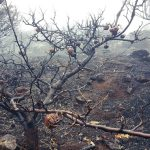 La cumbre de Gran Canaria un mes despues del incendio 6