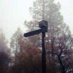 La cumbre de Gran Canaria un mes despues del incendio 7