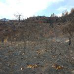 La cumbre de Gran Canaria un mes despues del incendio 9