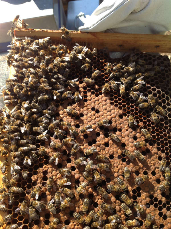 experiencia apicola con Urban Apicultura 1