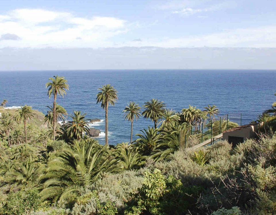 201711 Tenerife impulsa un proyecto para catalogar y conservar la palmera canaria