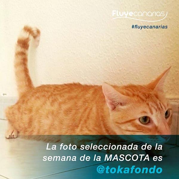 Claudio Sanchez ganador Semana de la Mascota