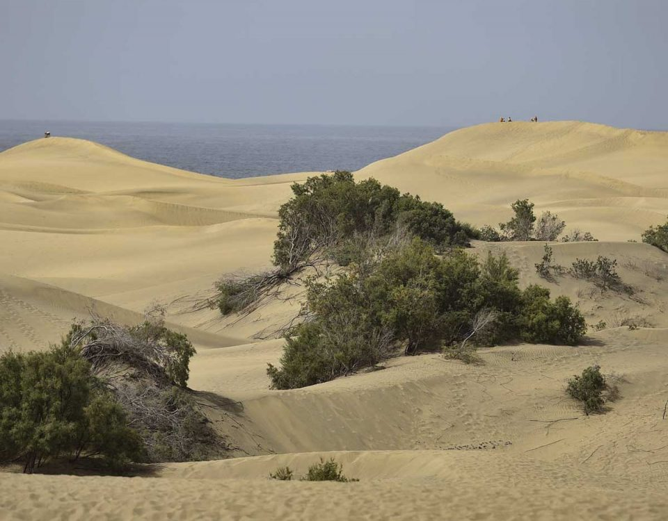 201807 Gran Canaria busca salvar las Dunas de Maspalomas