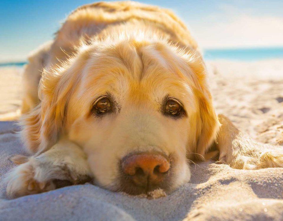 201807 Irte de vacaciones no significa abandonar a tu mascota
