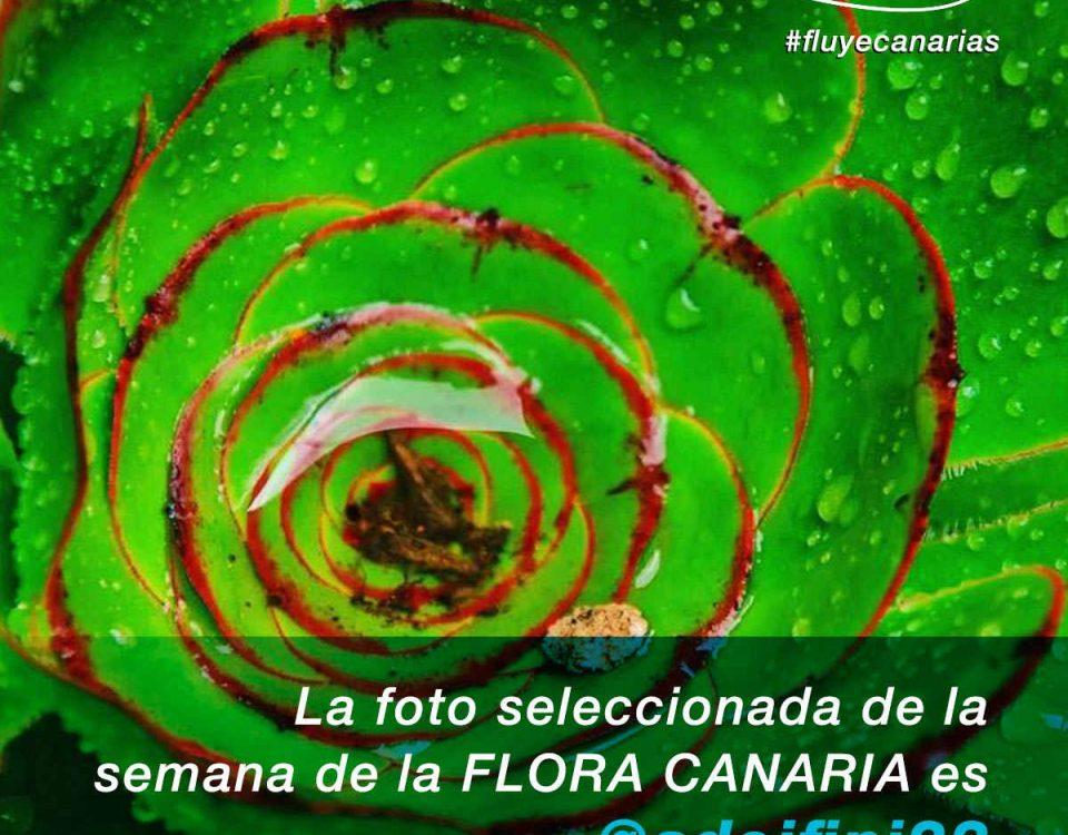 201810-FLUYE-Ganador-semana-FLORA-CANARIA1