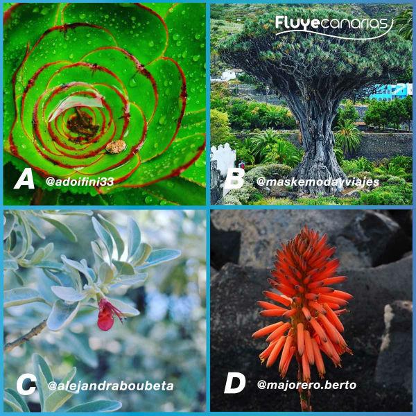 201810-FLUYE-Plantilla-4-Flora-canaria1