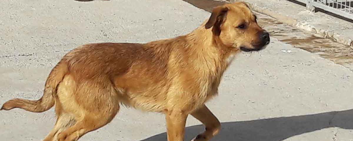 201901 adopciones de perros del Albergue Insular de Gran Canaria