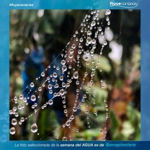 201903-FLUYE-Ganador-semana-agua1
