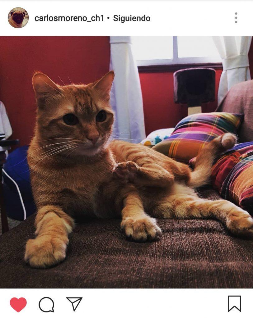 Semana de la Mascota_gato Mateo
