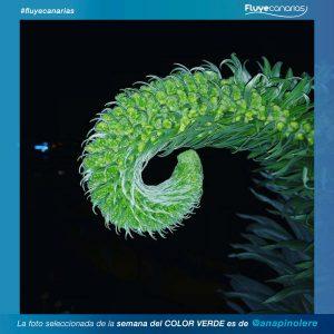 201903-FLUYE-Ganador-semana-COLOR-VERDE-A1