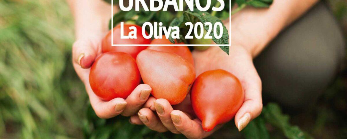 Los vecinos de La Oliva, Fuerteventura, dispondrán de huertos urbanos municipales