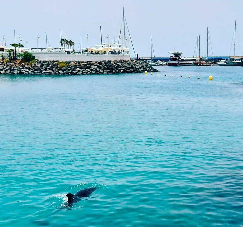 Delfín-adeje